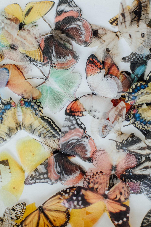 butterflies, wedding decor